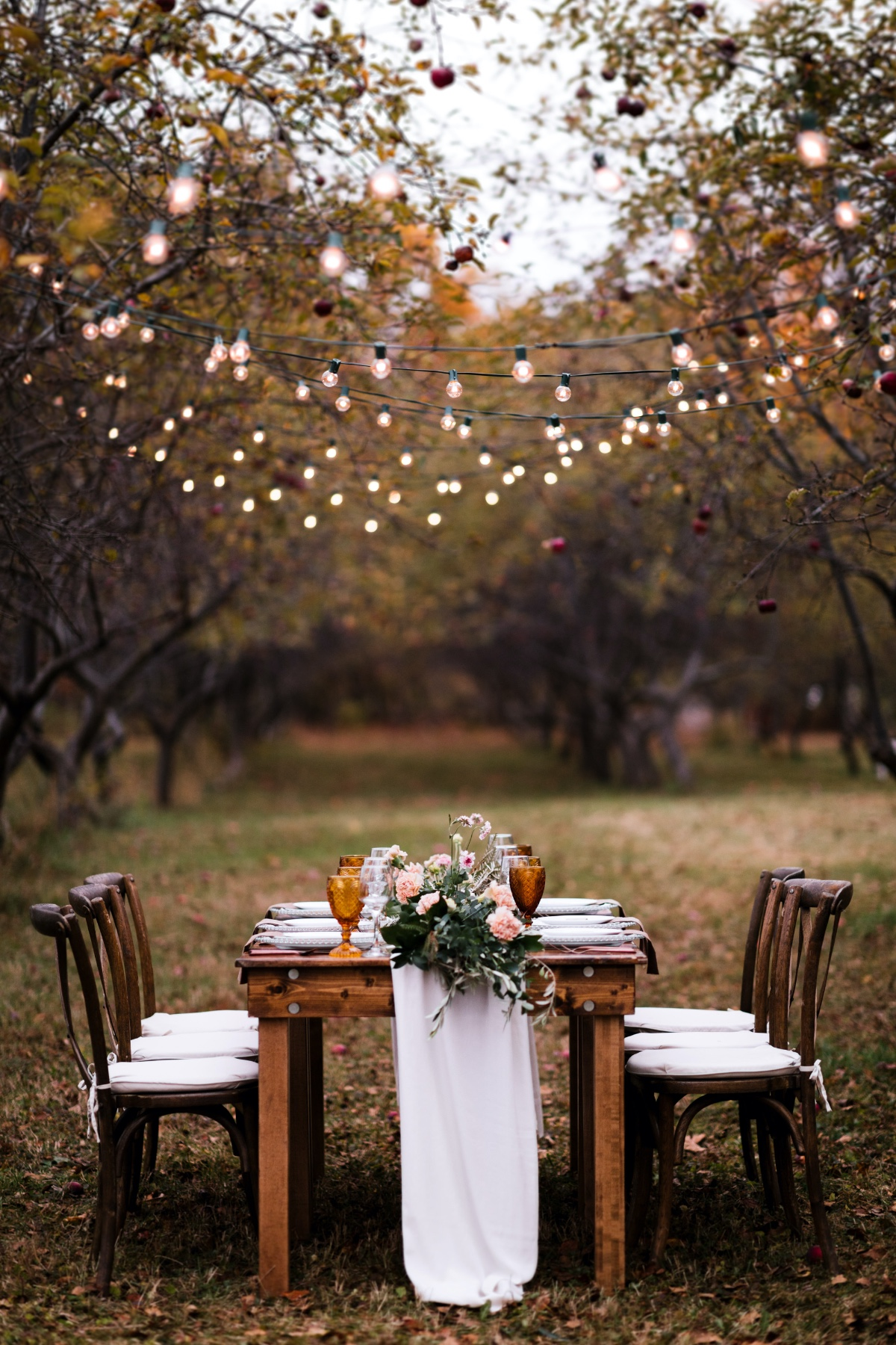 Outdoor dining in apple orchard under twinkle lights