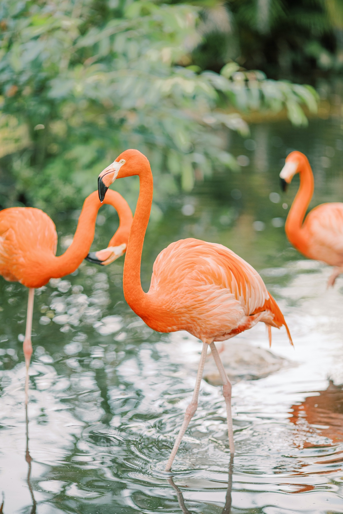 Everglades Wonder Garden styled with flamingos