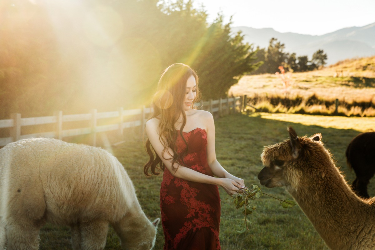 fall engagement photos with Alpacas captured by OneThreeOneFour