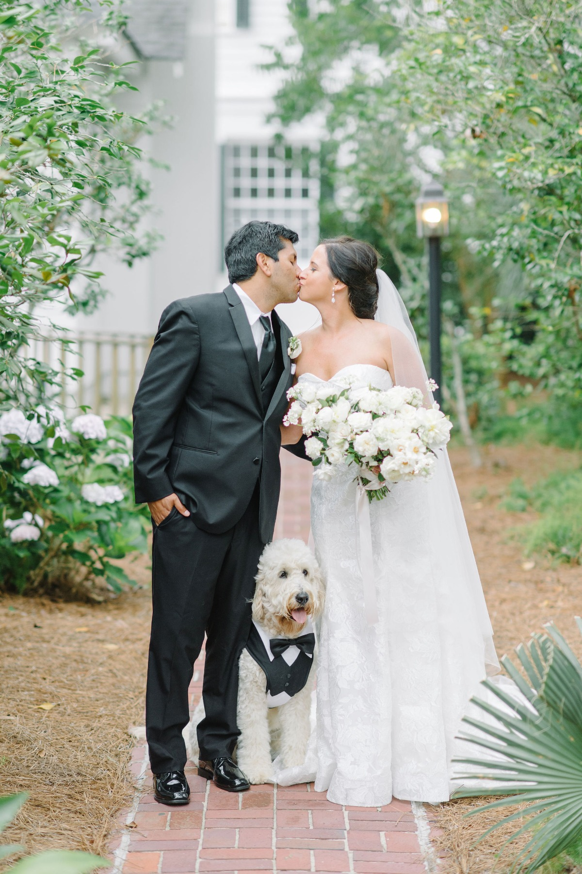 bride and groom with dog photo